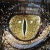 Vanatorul de crocodili: Crocodilul urban, studiu comportamental